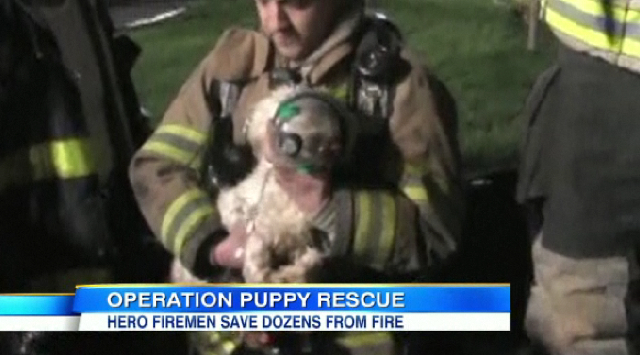 22 Puppies Saved From NJ Fire