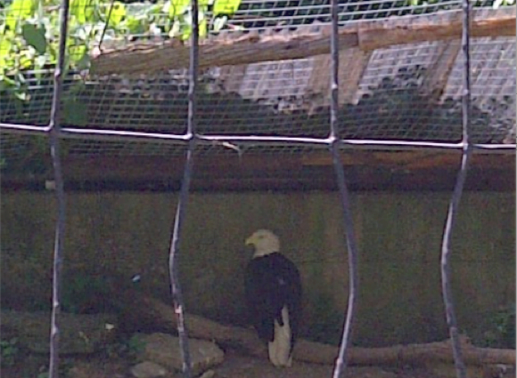 Rock, Flag & Eagle: Philadelphia Zoo Edition