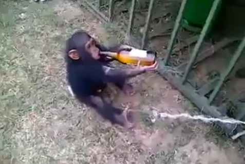 This Baby Monkey Really Likes His Hooch