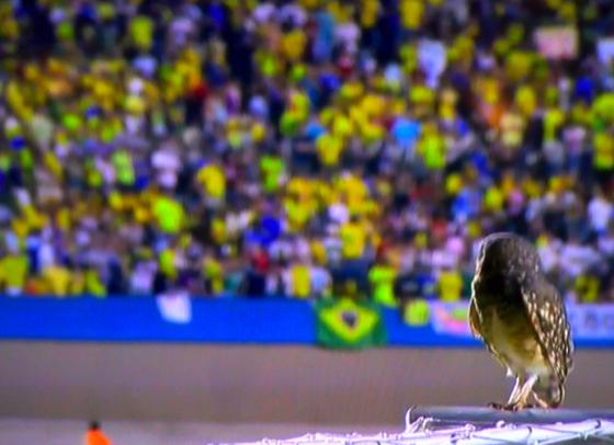 Check Out These Nature Shots from the Superclásico de las Américas Match