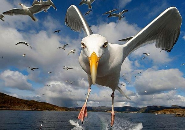 This Is Probably The Best Picture Ever Taken Of A Living Seagull