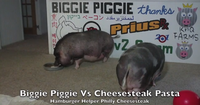 I Can't Stop Watching These Huge Pigs Chowing Down On Cheesesteak Flavored Hamburger Helper