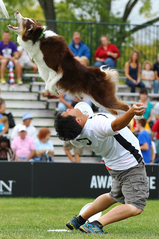 Purina Pro Plan Incredible Dog Challenge National Finals