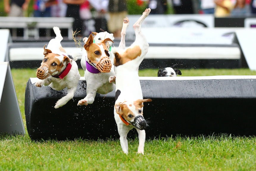 Hey Look, Cool Pictures Of Dogs Doing 'Olympic-Style' Things!