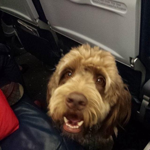 My Harrowing Experience On US Airways Flight 598 Aka The Dog-Poo Plane
