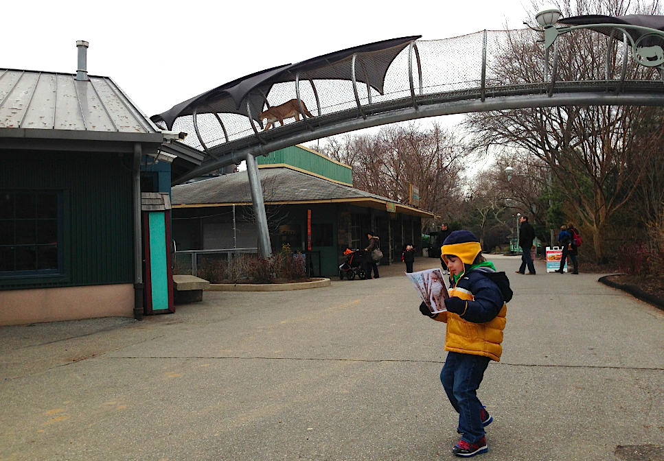 Here's A Picture Of My Son Ignoring A Puma That's Walking Overhead