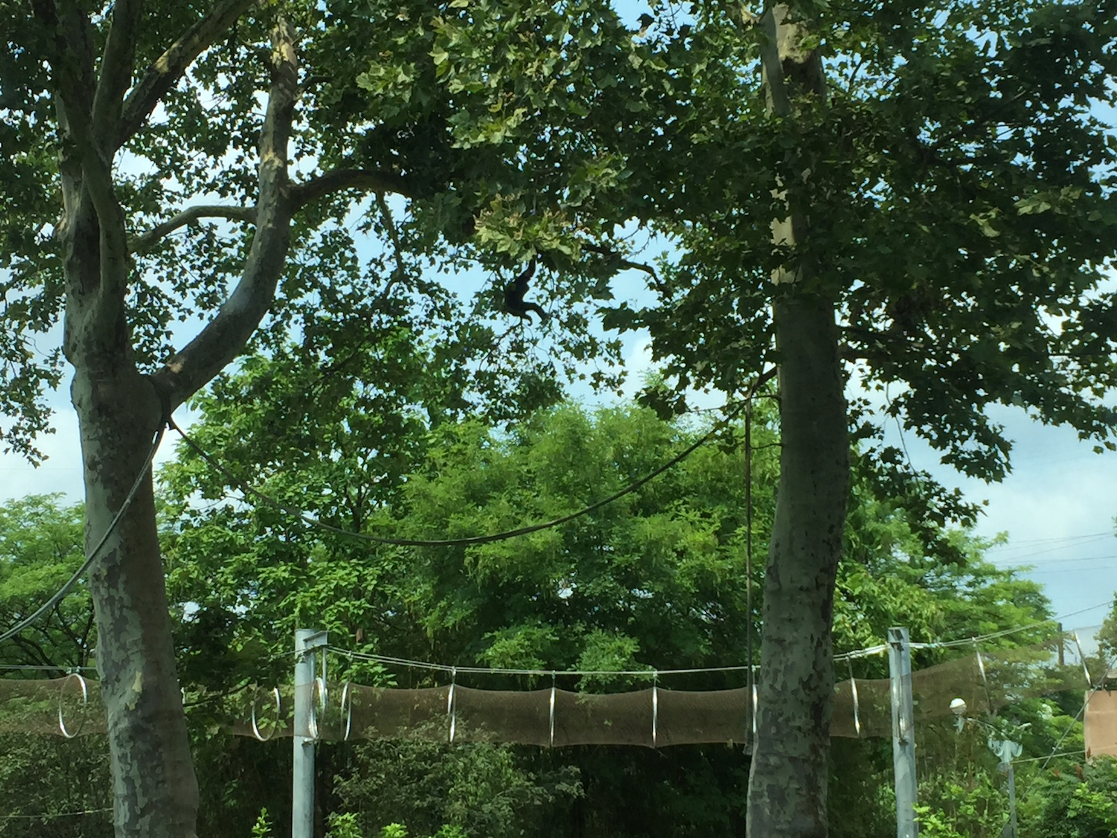Can You See The Monkey In This Tree?